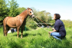 Enjoy equine activities in Devon and South West for personal development with Hush Farms.