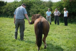Equine assisted coaching for corporate training to develop team and leadership skills.