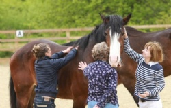 Learn about yourself through equine experiences with Hush Farms in East Devon.