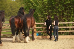 Equine assisted training with Hush Farms in Devon, London and the UK.
