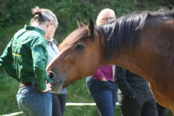 Rediscover yourself with our equine experiences with Hush Farms in Devon