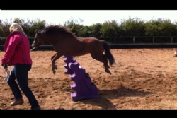 Equine assisted coaching for businesses in the UK.
